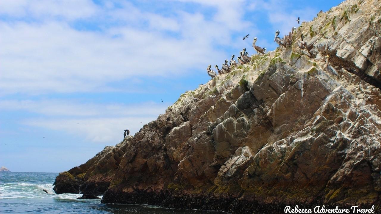 Ballestas Islands - Peru