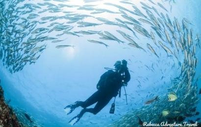 Galapagos Diving Fish