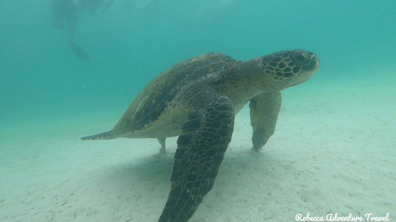 Snorkeling with a Marine Turtle