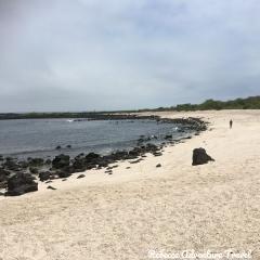 Rebecca Adventure Travel San Cristobal Beach