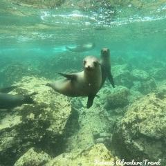 Rebecca Adventure Travel Sea Lions
