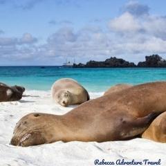 Rebecca Adventure Travel Galapagos Sea Lions