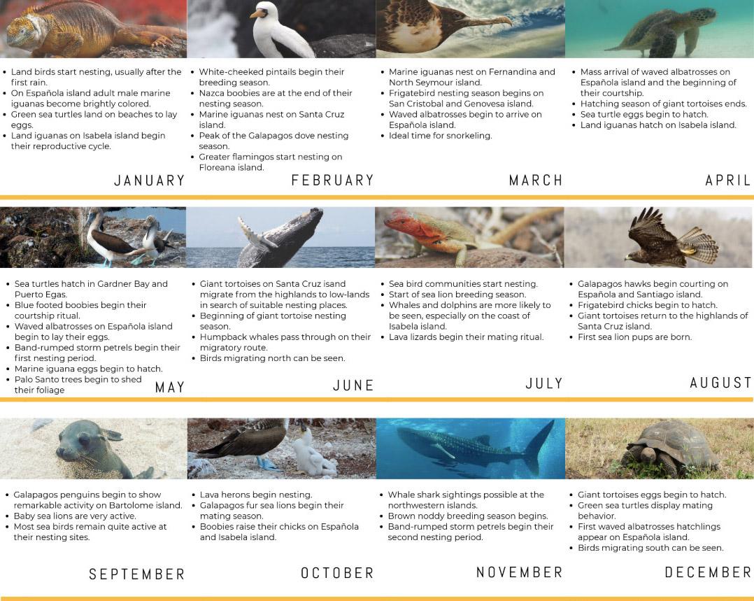 Galapagos Animal Schedule
