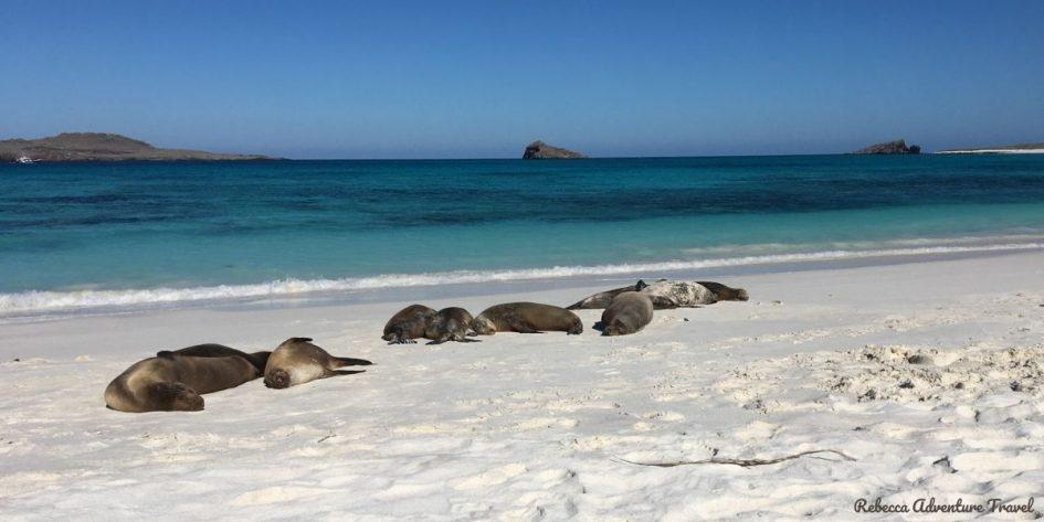 Travel Ecuador - Galapagos beach