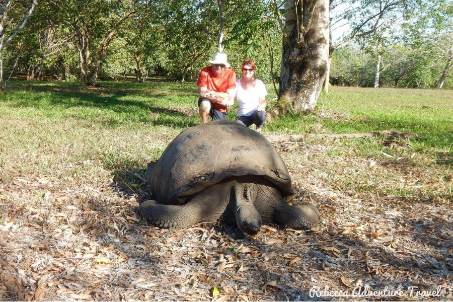 Travel Ecuador - Galapagos tortoise and couple