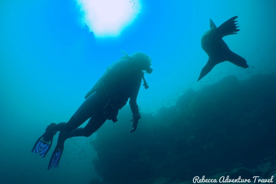 Diving with Sea Lion