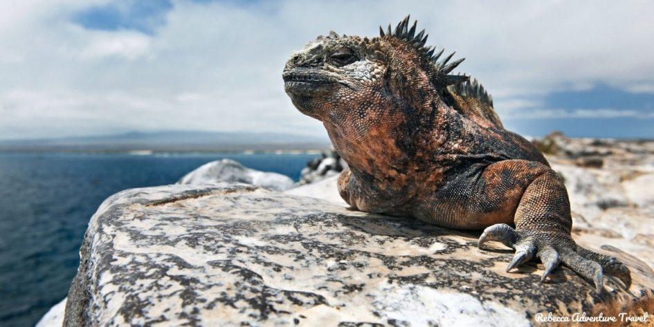 Ecuador and Galapagos holiday tours