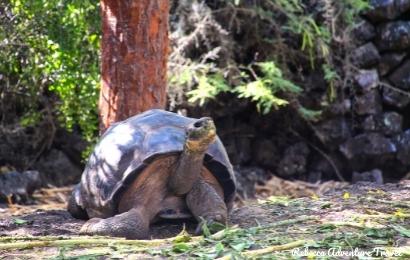 4D Galapagos Island Hopping Budget